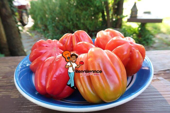 Gezahnte Buhrer Keel Tomato