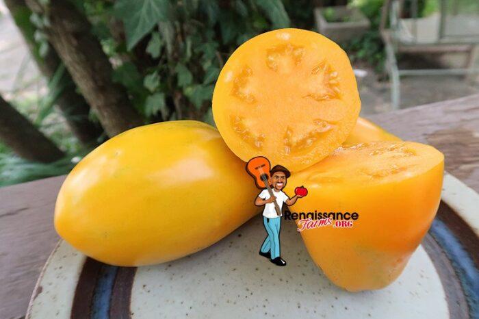 Golden Fang Tomato
