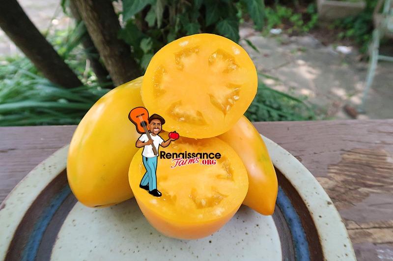 Golden Fang Tomato Image