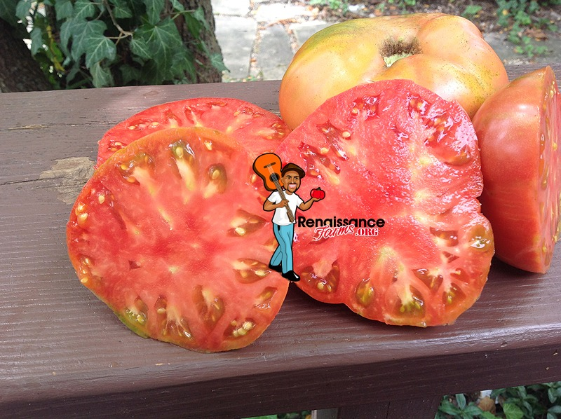 Great Bear Tomato