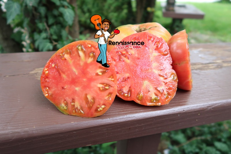 Great Bear Tomato Slice