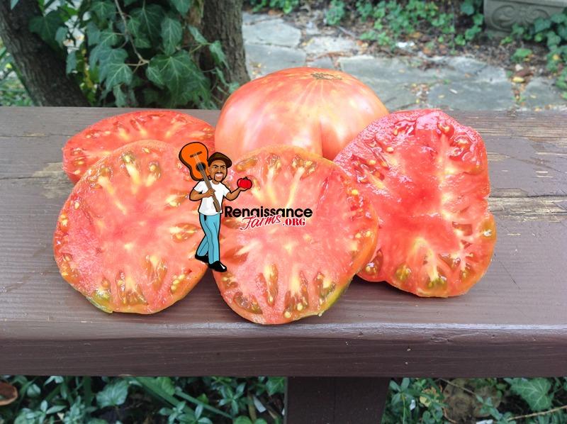 Great Bear Tomato Image