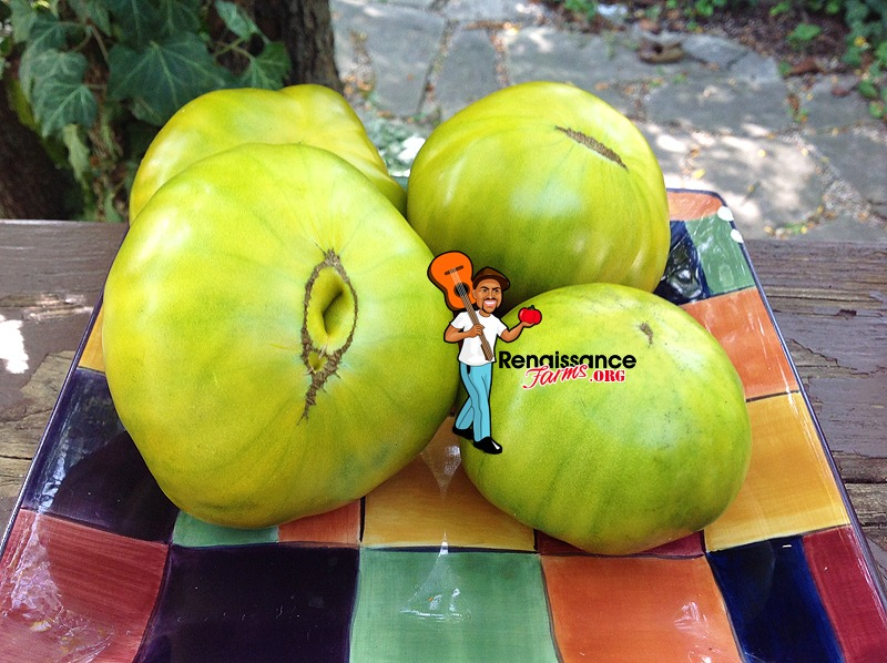 Green Gables Tomato