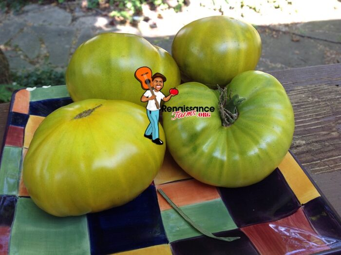 Green Gables Tomato Images