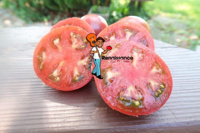 Dwarf Hazy's Dream Tomato 2020