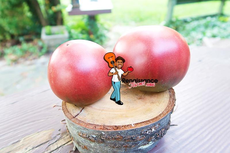 Dwarf Hazy's Dream Tomato Picture