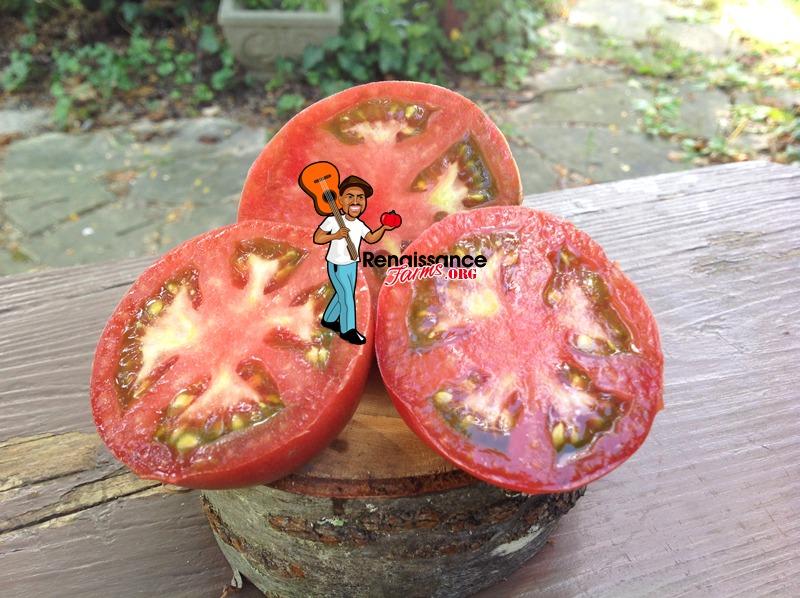Dwarf Hazy's Dream Tomato Image