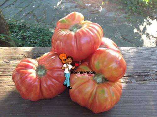 La Vie En Rose Tomato