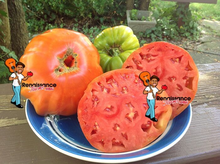 Luchese Tomato On Plate