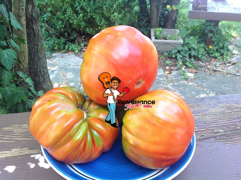 Luchese Tomato