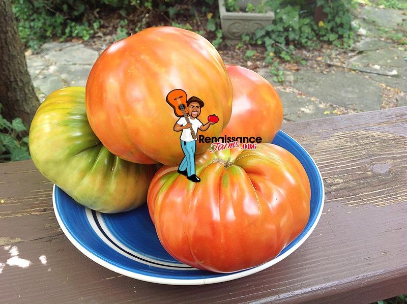 Luchese Tomato 2019