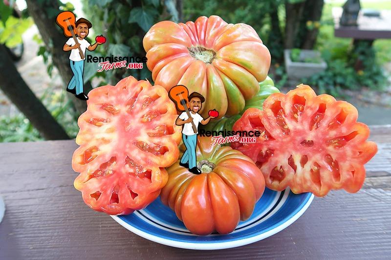 Mushroom Basket Tomato