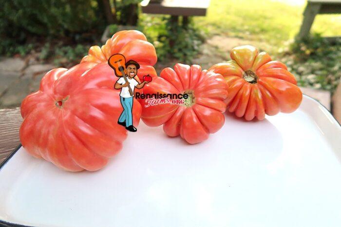 Mushroom Basket Tomato Pink