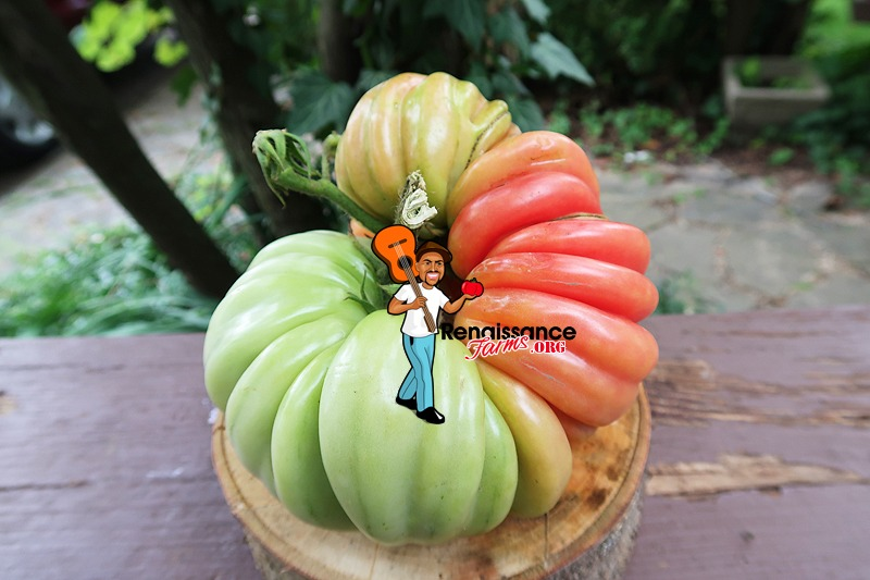 Mushroom Basket Tomato Large