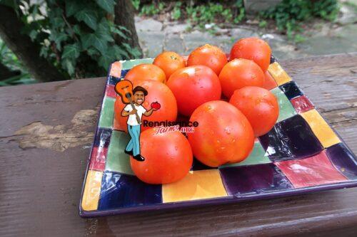 Oakley Park Tomatoes