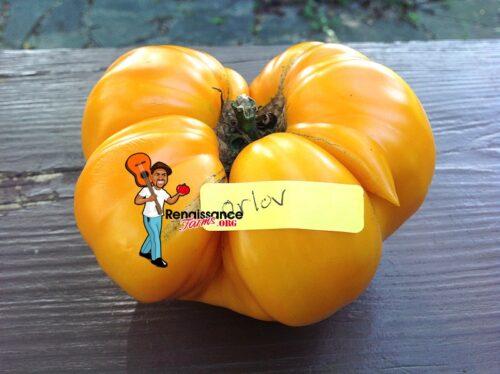 Orlov Yellow Giant Tomato Image