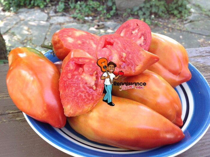 Paulina Tomato iMAGE