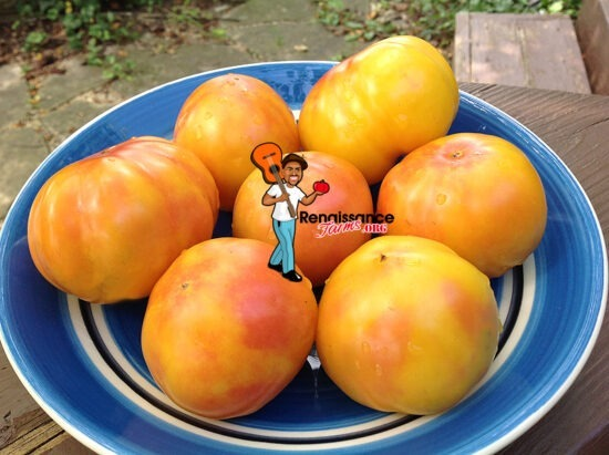 Polish Pastel Tomato on Plate
