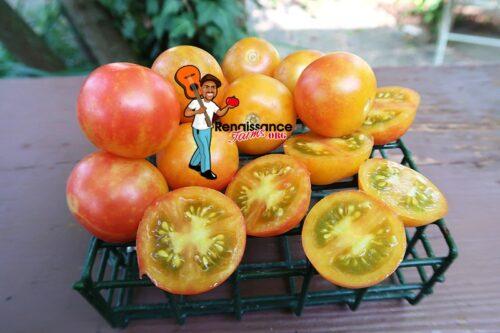 Rainbow Cherry Tomato 2020