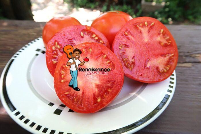 Byelorussian Tomato Rare