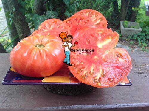 Reinhard Kraft's Giant Astrakhansky Tomato 2019