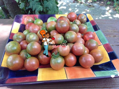 Reinhard Kraft's Purple Sugar Tomato