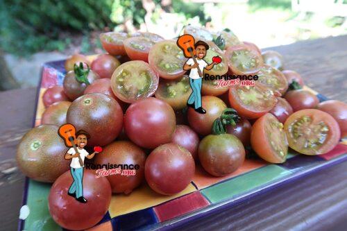 Rosella Tomato