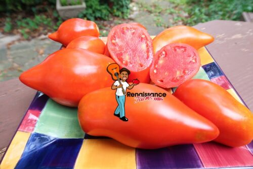 San Marzano Redorta Tomato