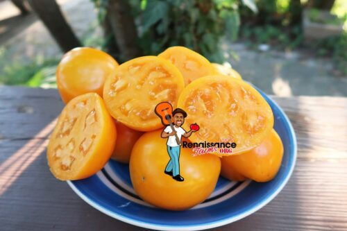 Sarga Trophy Tomato