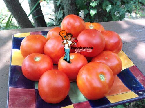 Silvertuck Queen Tomato Image