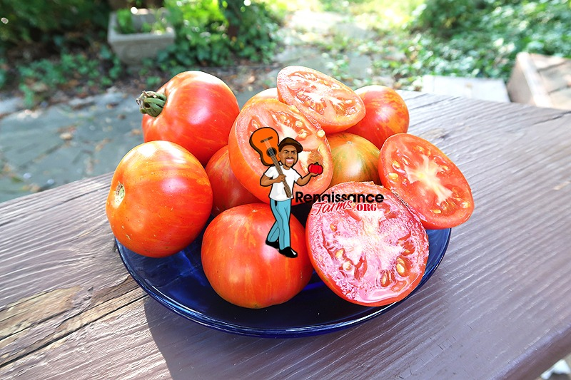 Sky Reacher Tomato