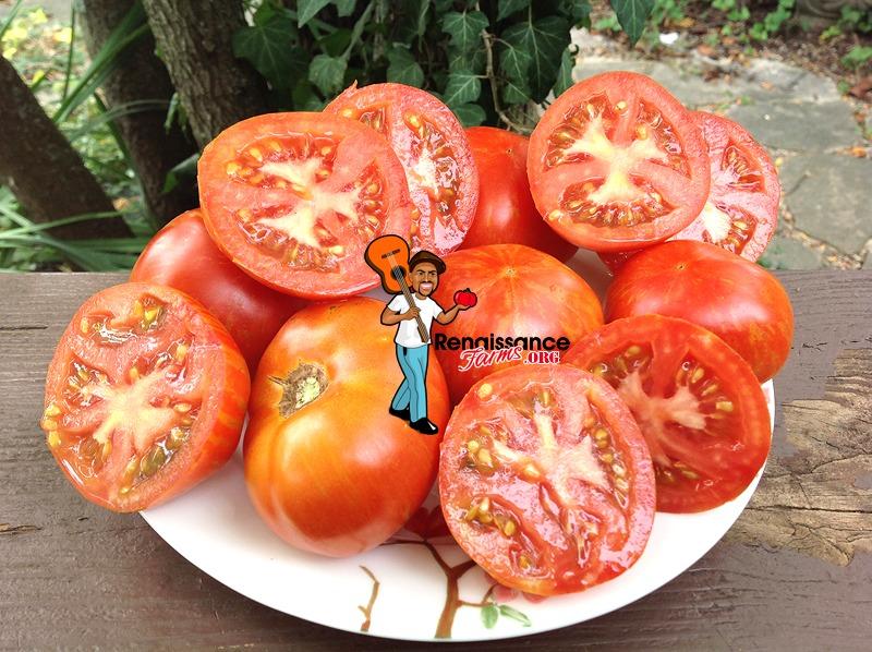 Sky Reacher Tomato On White Plate