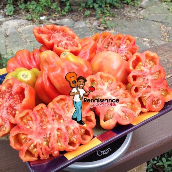 Tlacolula Pink Tomato Image