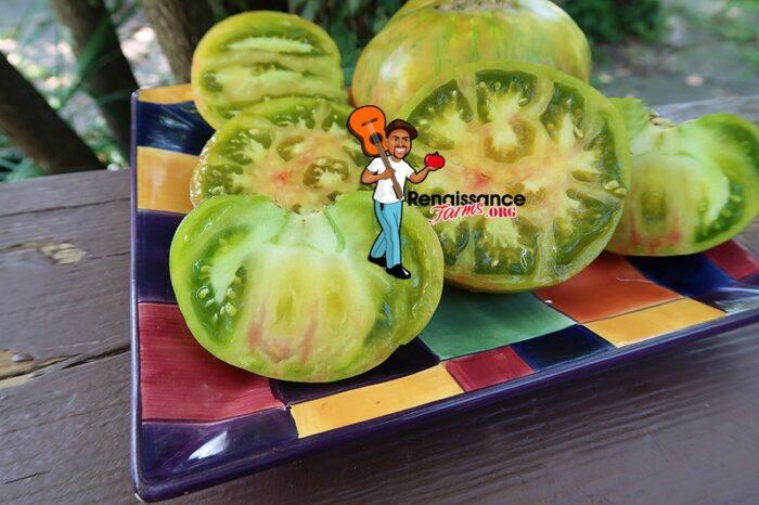 Ananas Zebra Tomato 2020