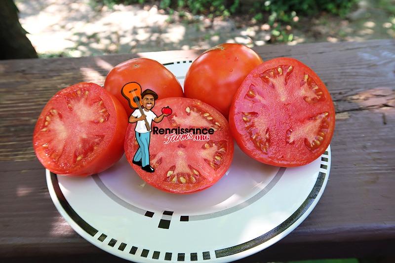 Byelorussian Tomato Seeds