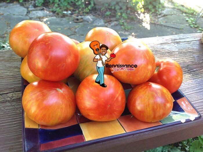 Sky Reacher Tomato Renaissance Farms