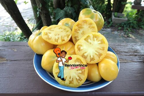 Viva Le Bruno White Tomato