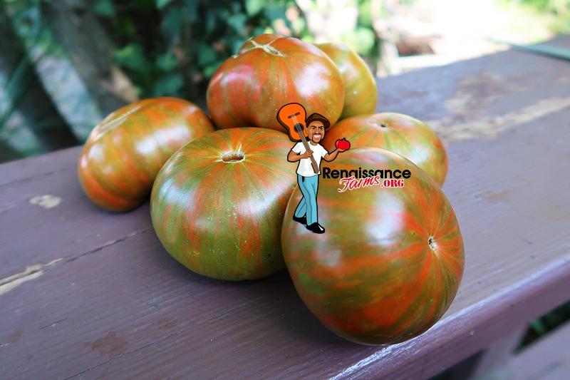 Zebra Ezel Tomato