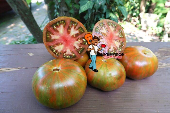 Zebra Ezel Tomato 2020