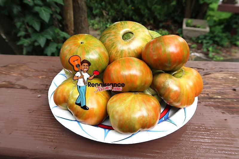Zebra Ezel Tomato Image