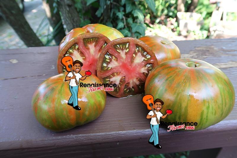 Zebra Ezel Tomato Picture