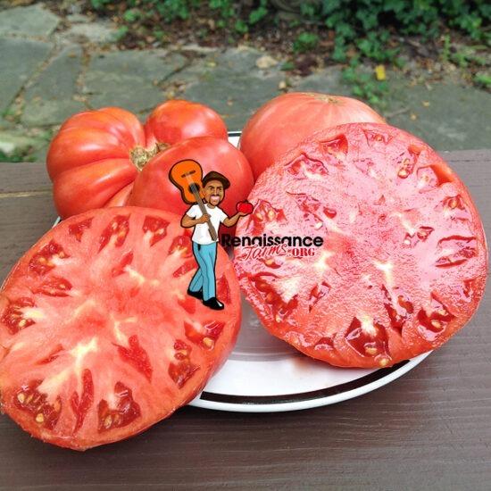 African Beefsteak Tomato