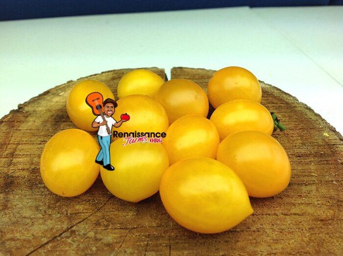 Auranticum Cherry Tomato