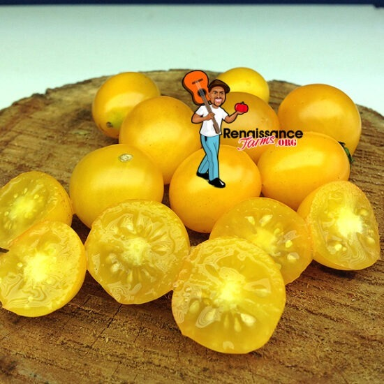 Auranticum Tomato
