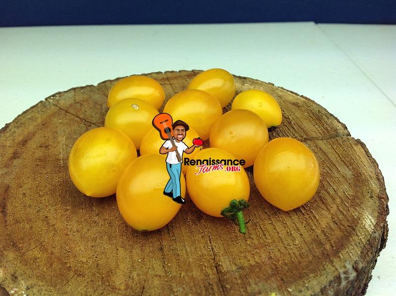Auranticum Tomatoes
