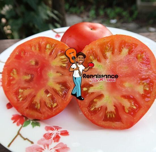 Belle Arlesienne Tomatoes