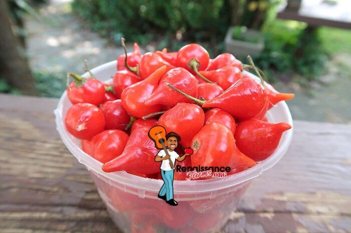 Biquinho Red Pepper