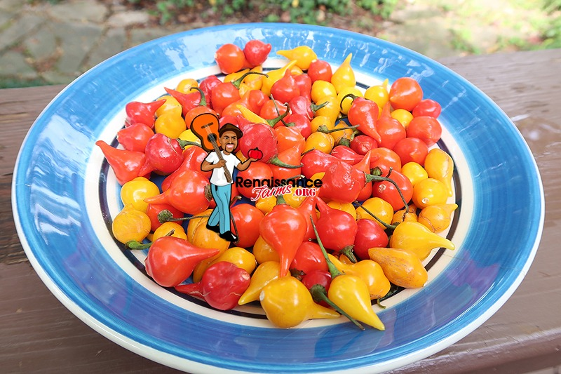 Biquinho Pepper Red And Yellow