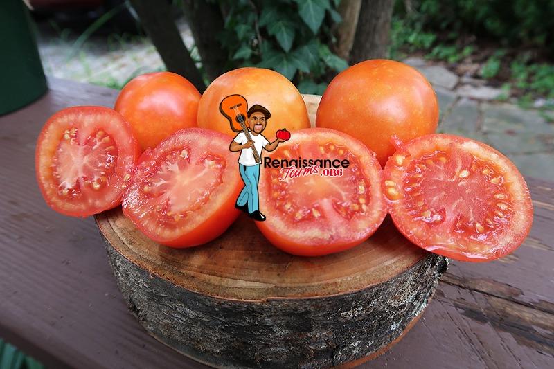Burgurland's Triumph Tomato
