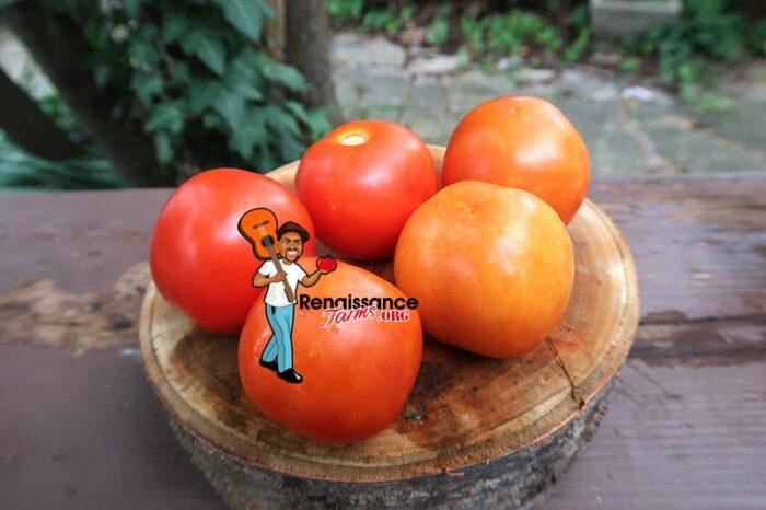 Burgurland's Triumph Tomatoes